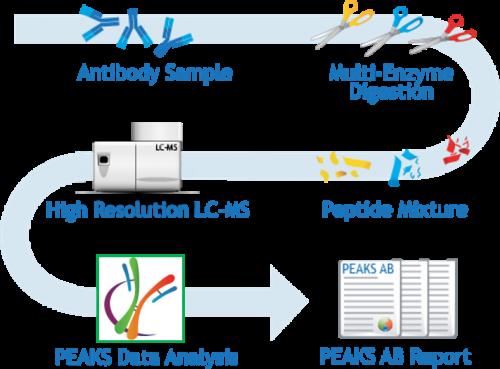 de novo antibody protein sequencing service workflow