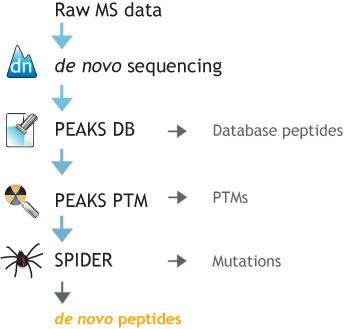 PEAKS Protein Identification Workflow