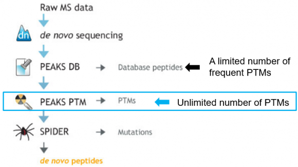 PEAKS PTM analysis workflow